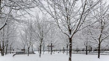Maisons-Alfort sous la neige
