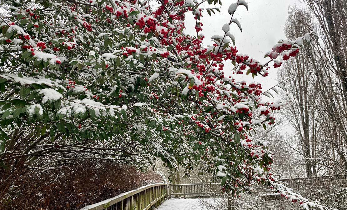 Neige sur Maisons-Alfort