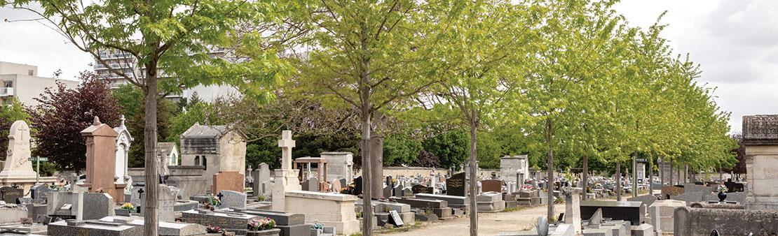 Embellissement : végétalisation du cimetière communal