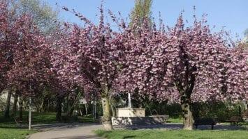 Fleurissement de printemps 2019