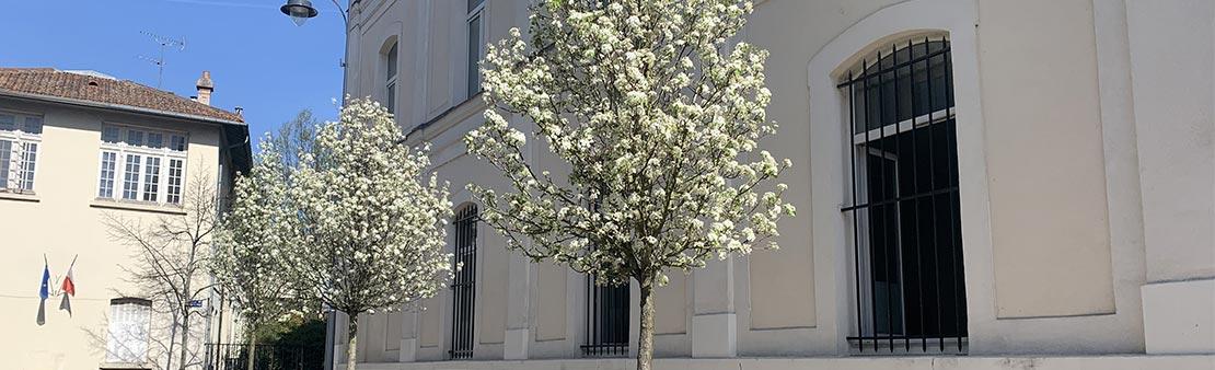 1 000 arbres pour Maisons-Alfort : Et si la Ville plantait des arbres chez vous ?